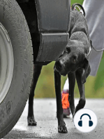 Understanding Arousal and the Yerkes-Dodson Law as it Relates to Canine Scentwork