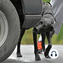 How Nosework Benefits the Reactive Dog: Join me for a discussion with Molly Sumridge, Certified Dog Behavior Consultant and Board member of IAABC on the benefits of Nosework for the reactive dog.