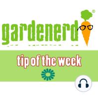 Thinning your Seedlings: The Gardenerd.com Tip of the Week for October 25, 2008