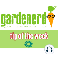 Raised Bed Gardening with Conor Fitzpatrick: Higher Yields from Pepper Plants