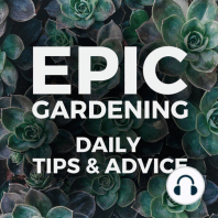 12 Great Patio Container Plants: Here's an episode for you patio gardeners out there! 12 ornamental plants that you can grow well in containers on patio. Now there are NO excuses to getting something green and colorful on your property :) Keep Growing, Kevin Epic Soil Starter I've...
