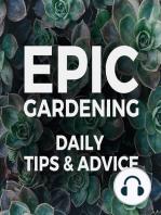 Propagating Houseplants 101