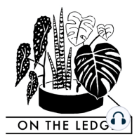 Episode eighteen: preparing succulents and cacti for winter: On The Ledge episode 18: preparing succulents and cacti for winter