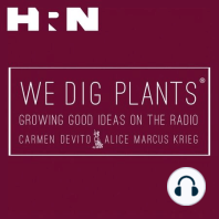 Episode 95: David Austin Roses with Michael Marriott: This week on We Dig Plants, Carmen Devito and Alice Marcus Krieg are joined via the telephone by Michael Marriott, the rosarian at David Austin Roses. David Austin is now 86 years old, and is still an enthusiastic plant breeder! Tune into this episode to
