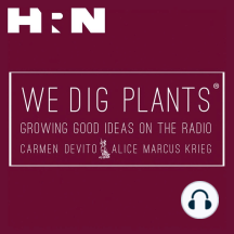 Episode 83: Susan Lacerte: This week on We Dig Plants we move away from Brooklyn and take a look at another borough: Queens. Susan Lacerte, executive director of the Queens Botanical Garden, joins hosts Alice Marcus-Krieg and Carmen Devito to shed light on the great cultural and te
