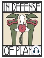 Ep. 181 - Protecting Alpine Plants in the Adirondacks