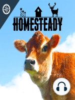 Honey, Bees, and Should a Homesteading Family Try Beekeeping?