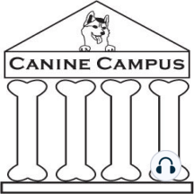 Canine Campus #13: Resource Guarding: Keeping pup away from treasured but troublesome treats.