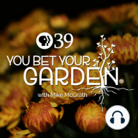 Curing Garden Beds of Weeds and Disease: Are you gardens overrun with weeds and disease? On today's YBYG, Mike McGrath reveals a way to cure your garden beds if you're willing to let the plot to take a summer off.