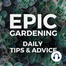 Losing Your Fear and Learning to Conquer: Gardening is a scary hobby for many to start in. We're often afraid of failure and feel that if we kill our plants, it reflects something deep about ourselves. In fact, the only way to get GOOD is to kill a lot of plants and learn! Connect With...