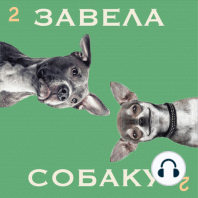 Серия первая — где искать собаку