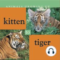 Kitten to Tiger