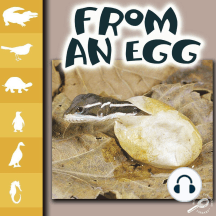 From an Egg: Life Science - Let's Look at Animals