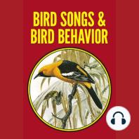 Bird Song and Behavior