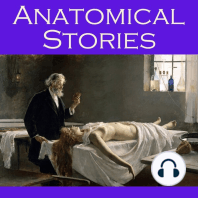 Anatomical Stories