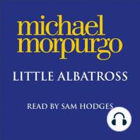 Little Albatross
