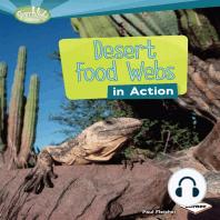 Desert Food Webs in Action