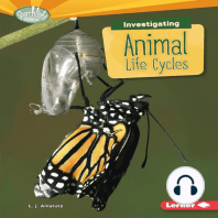 Investigating Animal Life Cycles