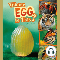 Whose Egg Is This?