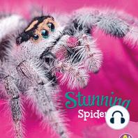 Stunning Spiders