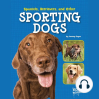 Spaniels, Retrievers, and Other Sporting Dogs