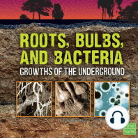 Roots, Bulbs, and Bacteria
