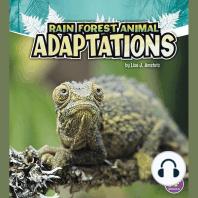 Rain Forest Animal Adaptations