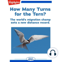 How Many Turns for the Tern?