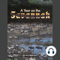 A Year on the Savannah