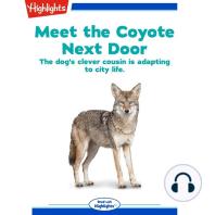 Meet the Coyote Next Door