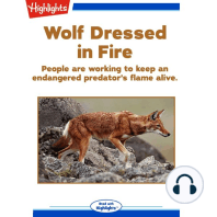 Wolf Dressed in Fire