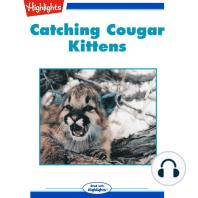 Catching Cougar Kittens