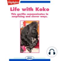Life with Koko