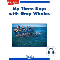 My Three Days with Gray Whales