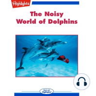 The Noisy World of Dolphins