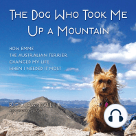 The Dog Who Took Me Up a Mountain
