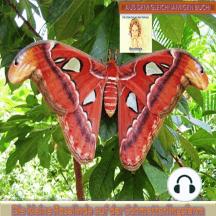 Die kleine Rosalinda auf der Schmetterlingsfarm: Aus dem gleichnamigen Buch: Die Abenteuer der kleinen Rosalinda