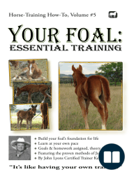 Your Foal