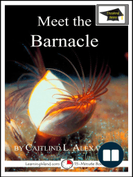 Meet the Barnacle