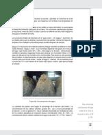 Fabricacion de La Panela en Colombia