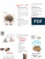 Triptico Cerebro Humano