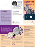 The RWAF guide to neutering your rabbit