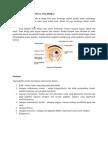Anatomi Kelopak Mata