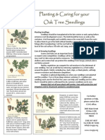 Planting and Caring for your Oak Tree Seedlings