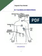 Astrologia y Glandulas Endocrinas