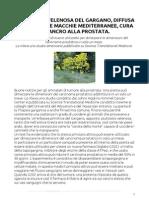 Una pianta velenosa del Gargano, diffusa nelle nostre macchie mediterranee, cura il cancro alla prostata.