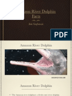 Amazon River Dolphin, The Pink Dolphin - Facts