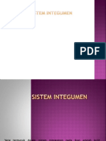ppt integumen