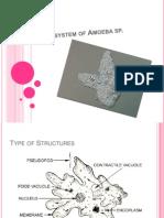 Respiratory System of Amoeba Sp