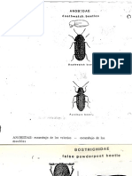 Insectos plagas